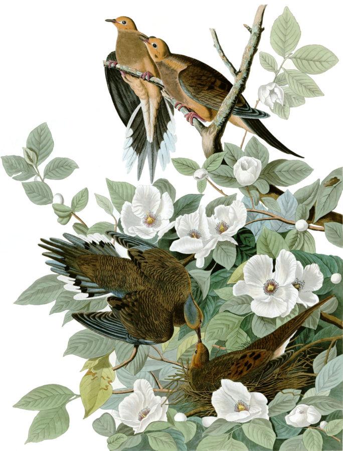 Birds of America. John James Audubon. 1827-1838. 10 millones de euros.